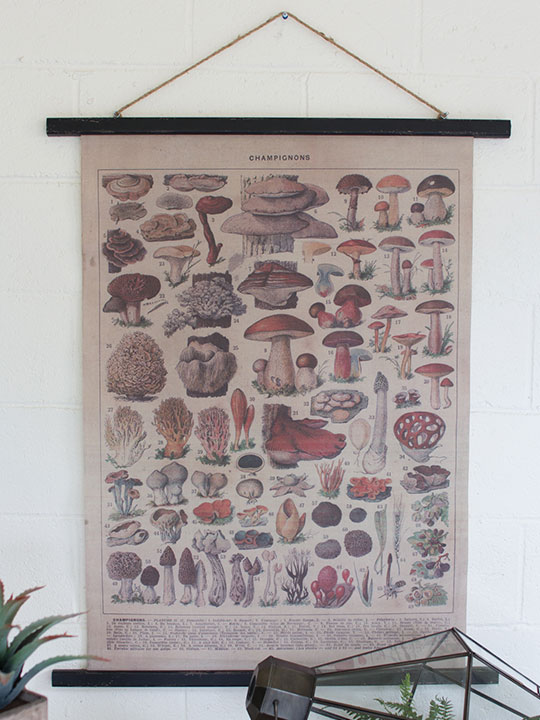 Canvas Fungi Art