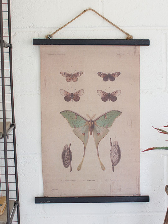 Canvas Moth Art