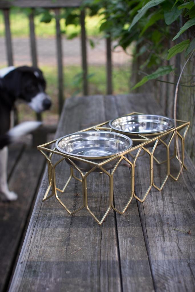 pet bowl modern gold
