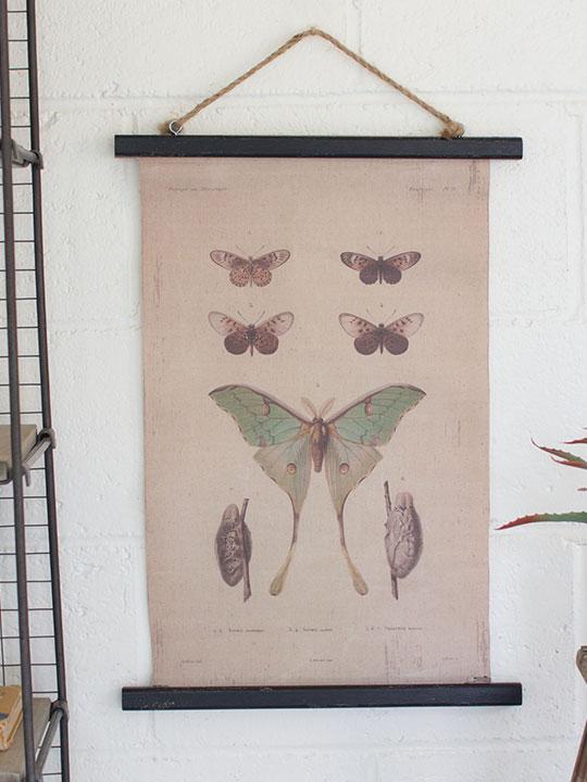 Canvas Moth Art